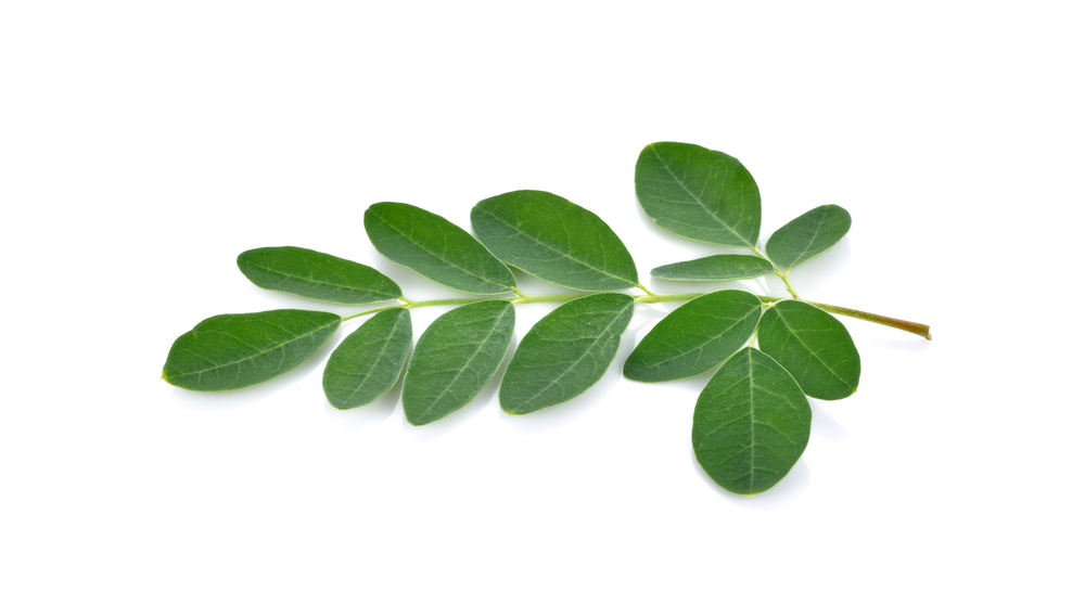 moringa-leaf-small.jpg